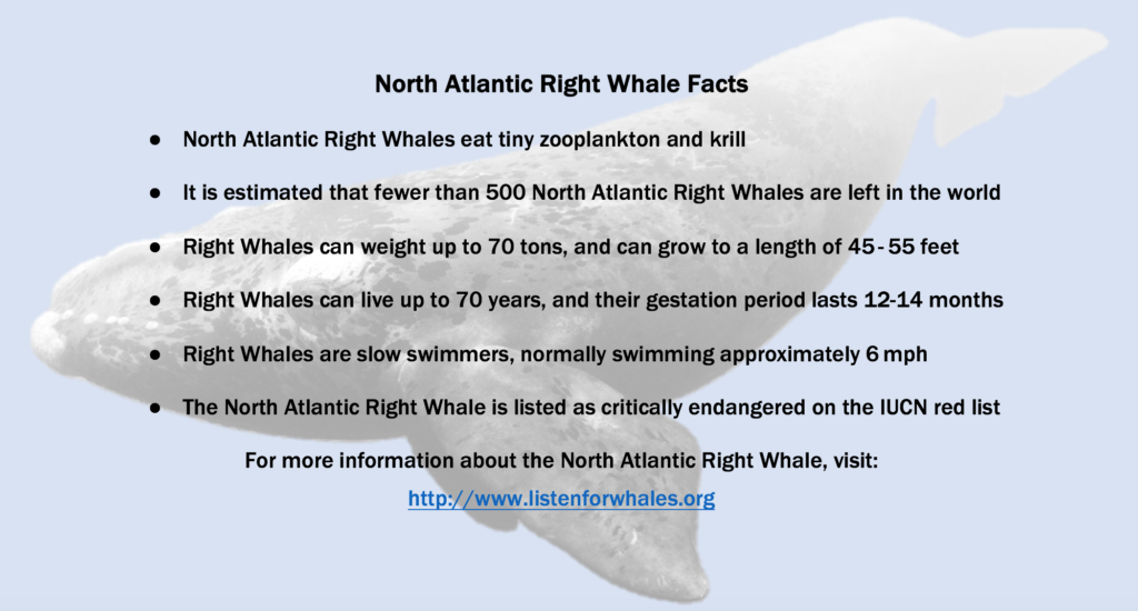 Let's learn something about our whale ambassador species